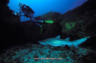 Shelley Beach Diver